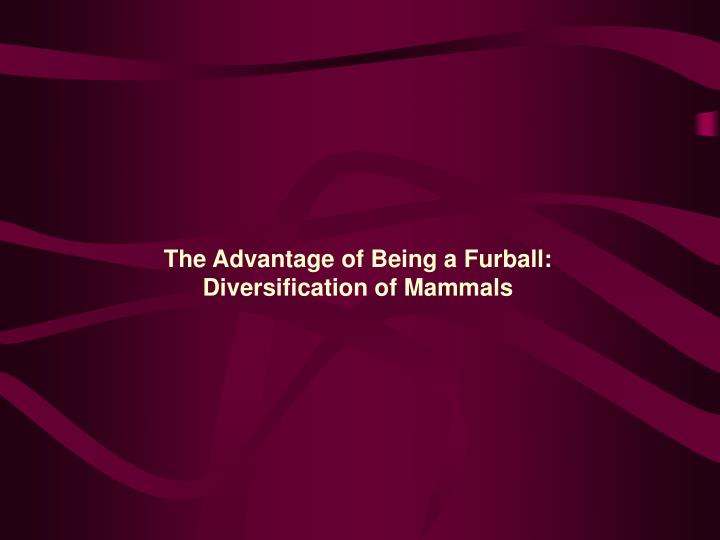 The Advantage of Being a Furball: