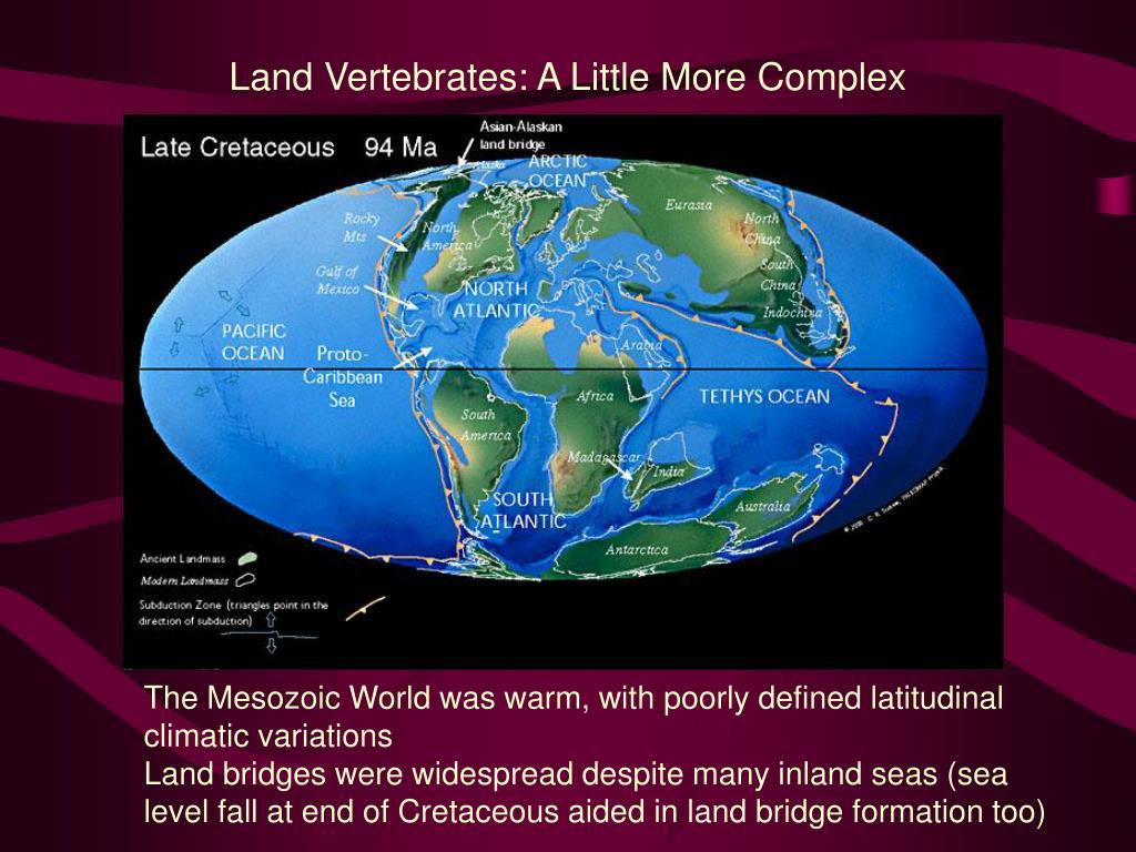 Land Vertebrates: A Little More Complex