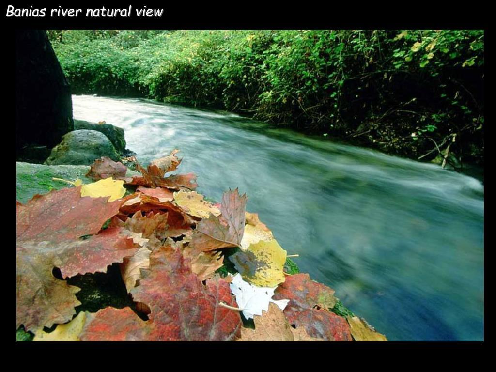 Banias river natural view