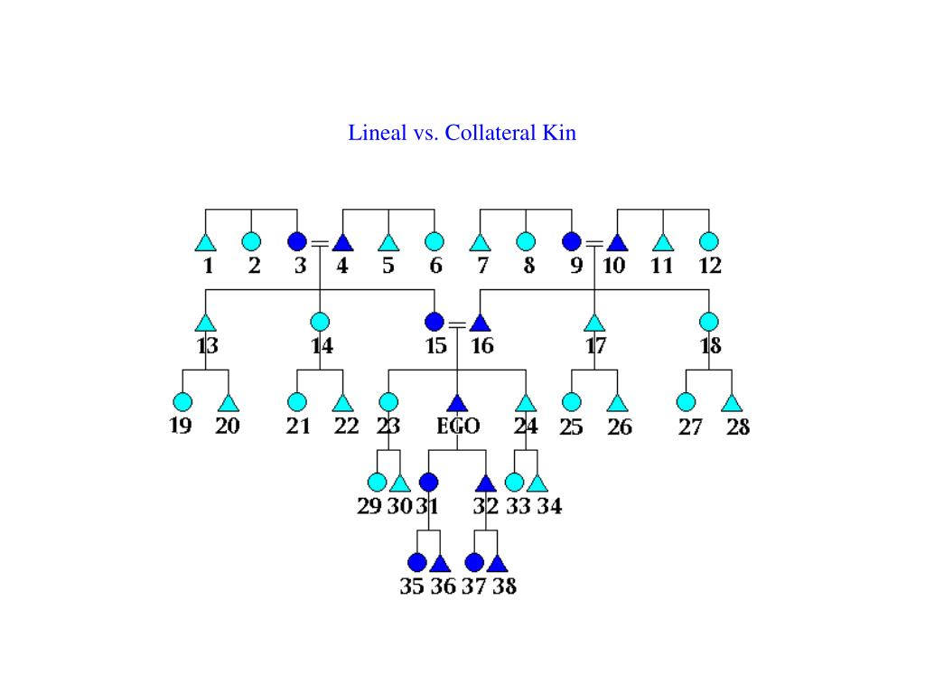 Lineal vs. Collateral Kin