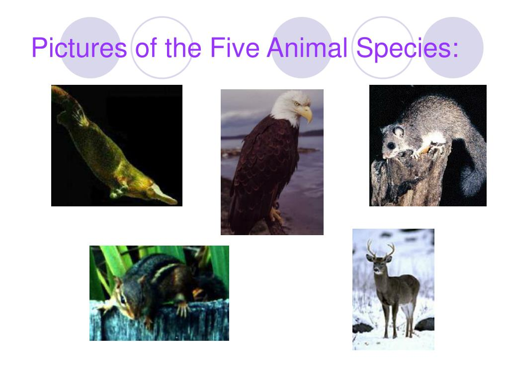 Pictures of the Five Animal Species:
