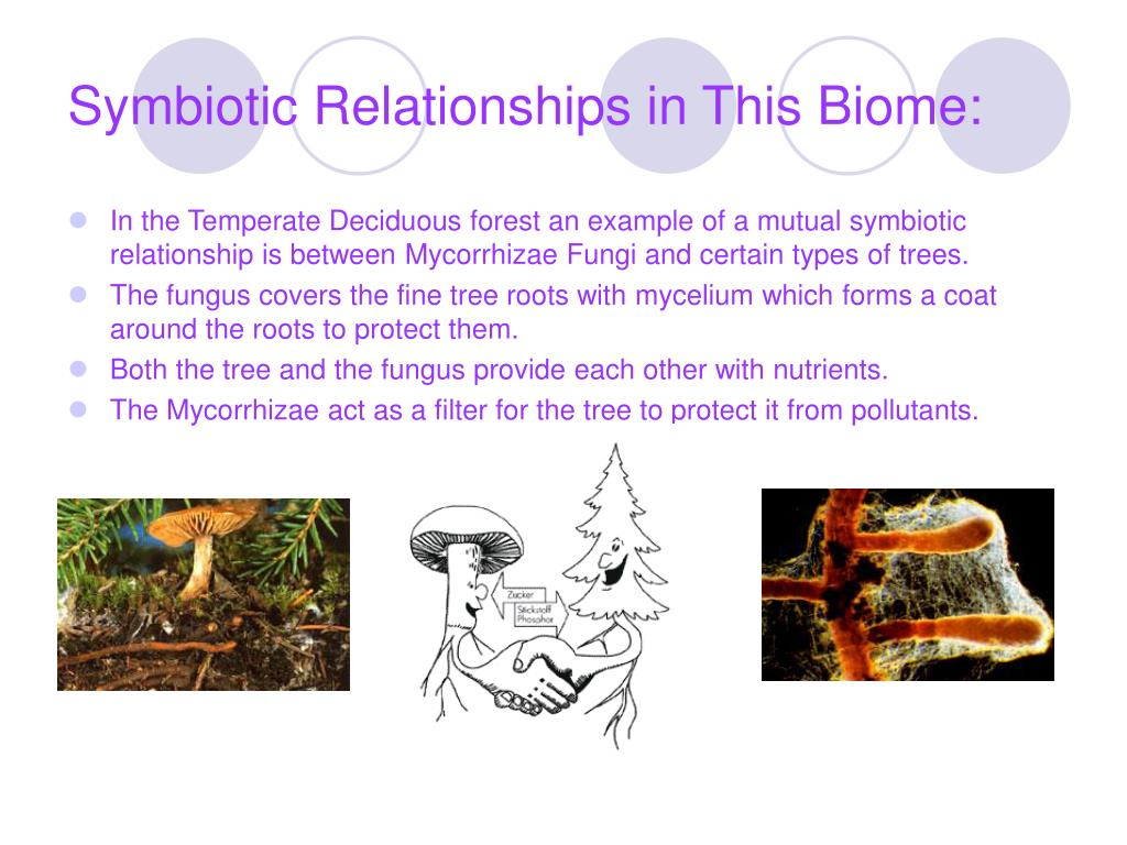 Symbiotic Relationships in This Biome: