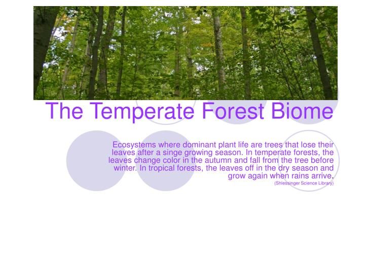 The temperate forest biome