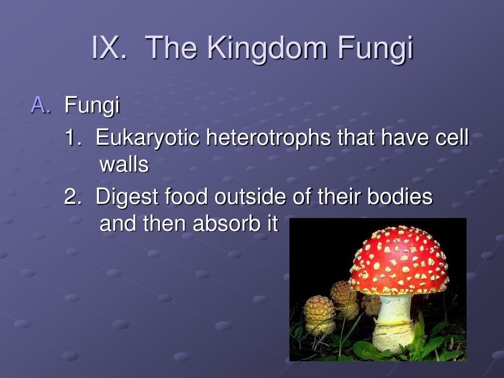 IX.  The Kingdom Fungi