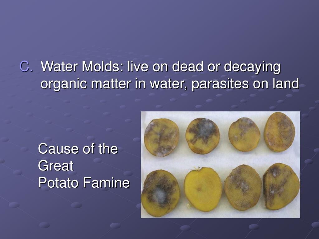 Water Molds: live on dead or decaying organic matter in water, parasites on land