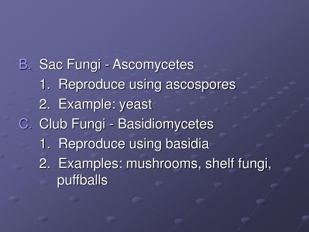 Sac Fungi - Ascomycetes