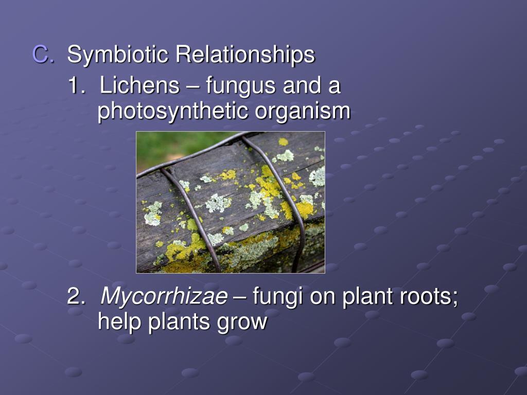 Symbiotic Relationships