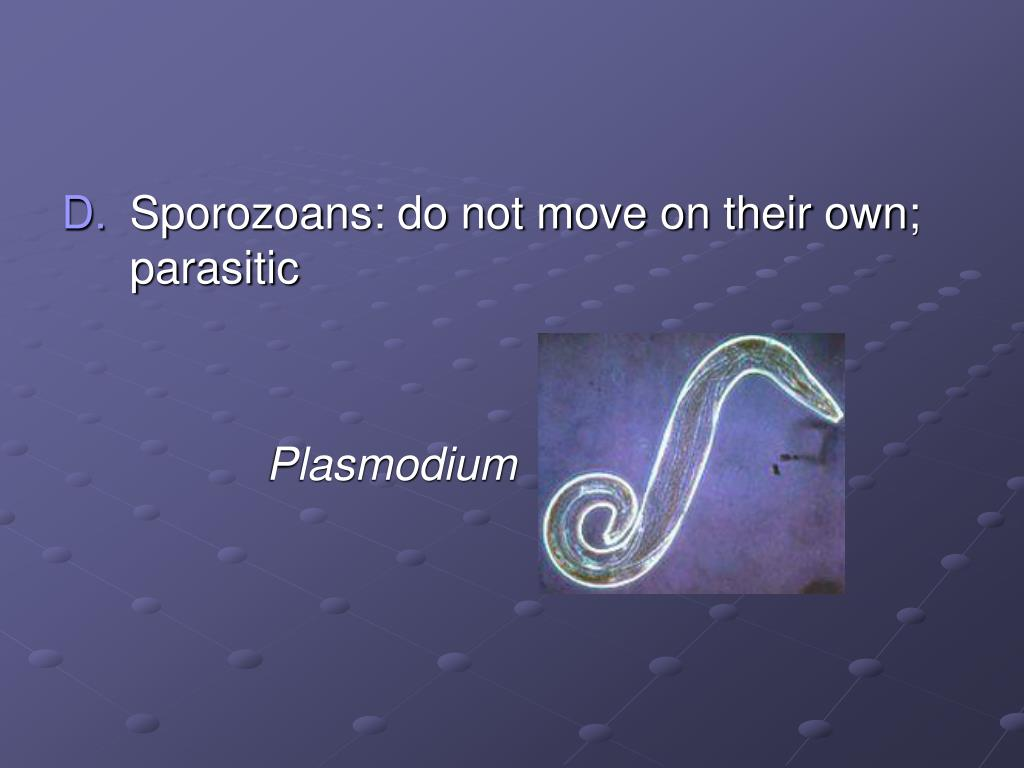 Sporozoans: do not move on their own; parasitic