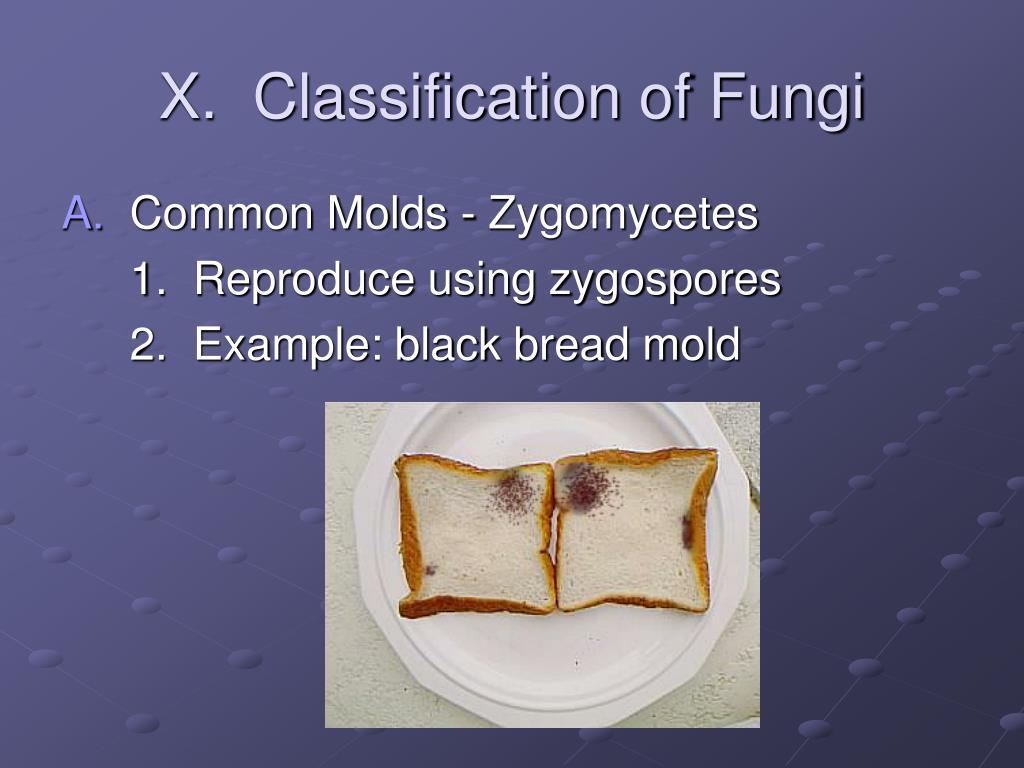 X.  Classification of Fungi