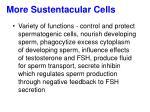 more sustentacular cells