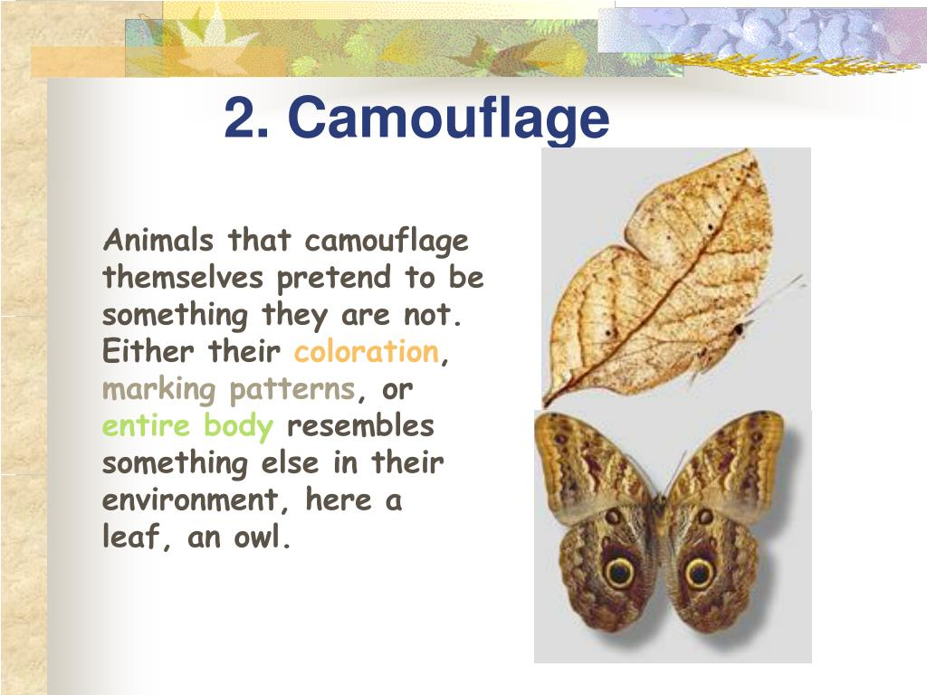 2. Camouflage