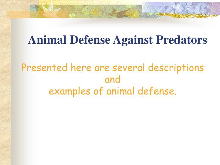 Animal defense against predators3