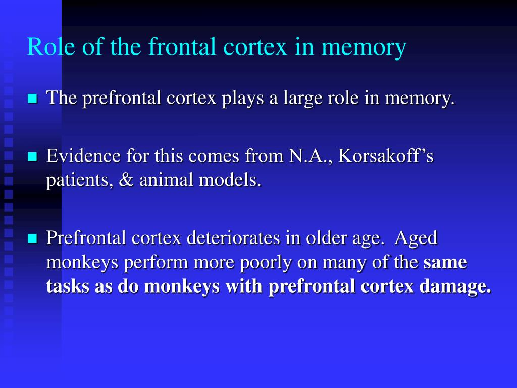 Role of the frontal cortex in memory