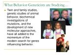 what behavior geneticists are studying