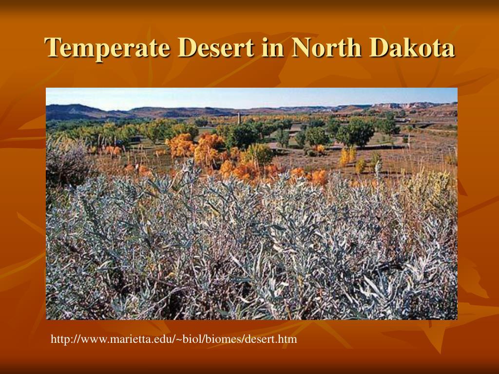 Temperate Desert in North Dakota