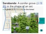 sarabande a conifer grove in the shape of an arc