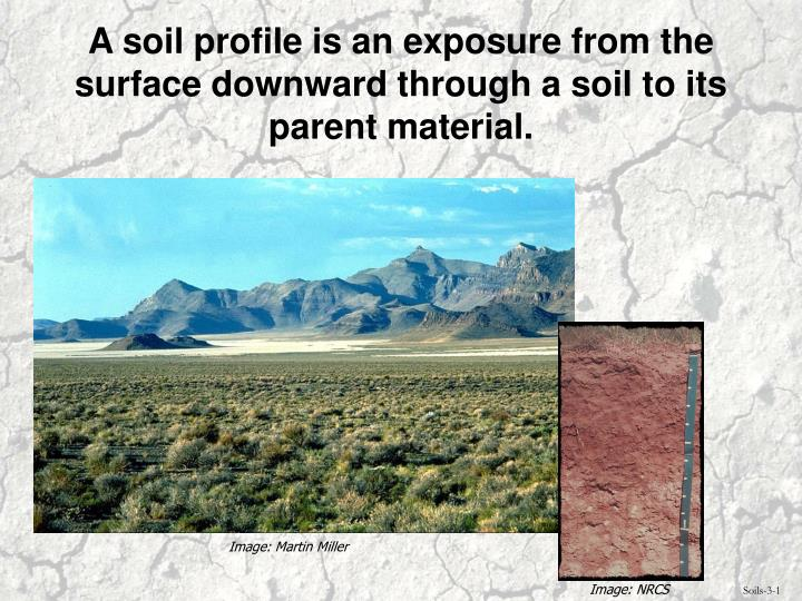 A soil profile is an exposure from the surface downward through a soil to its parent material.