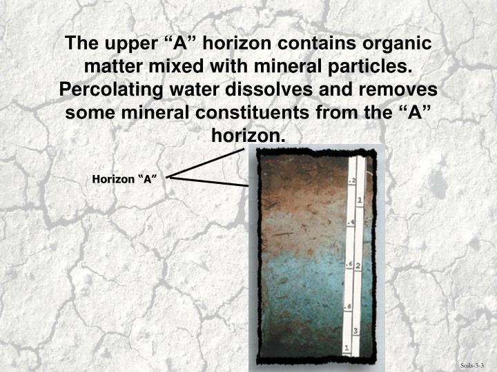 """The upper """"A"""" horizon contains organic matter mixed with mineral particles.  Percolating water dissolves and removes some mineral constituents from the """"A"""" horizon."""