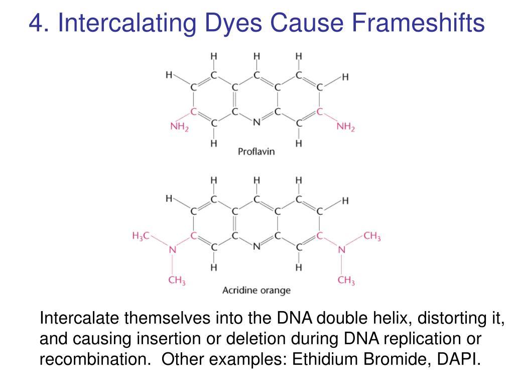 4. Intercalating Dyes Cause Frameshifts