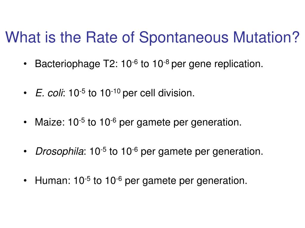 What is the Rate of Spontaneous Mutation?