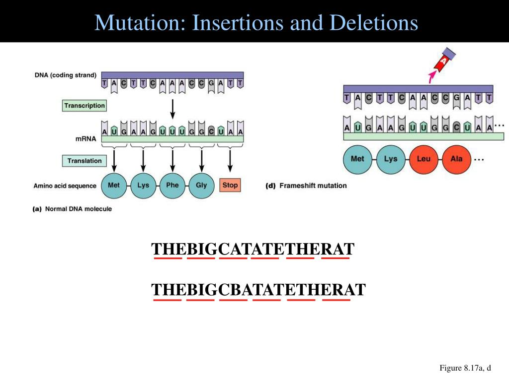 Mutation: Insertions and Deletions