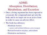 adme absorption distribution metabolism and excretion