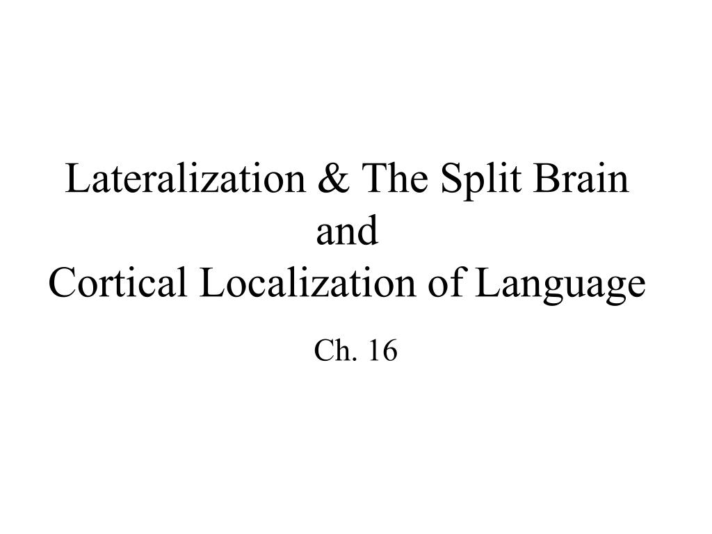 lateralization of functions left and right hemispheres Linear reasoning functions of language such as grammar and word production are often lateralized to the left hemisphere of the brain in contrast, holistic reasoning functions of language such as intonation and emphasis are often lateralized to the right hemisphere of the brain.