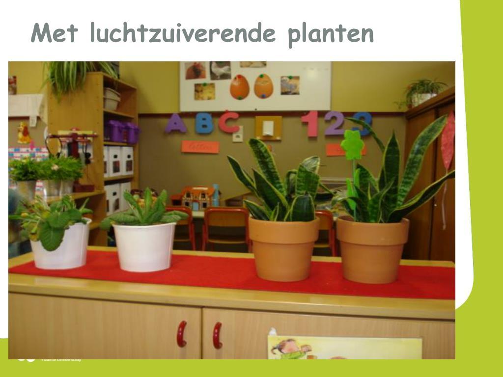 Met luchtzuiverende planten
