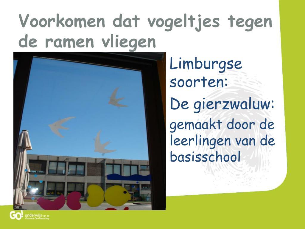 Limburgse soorten:
