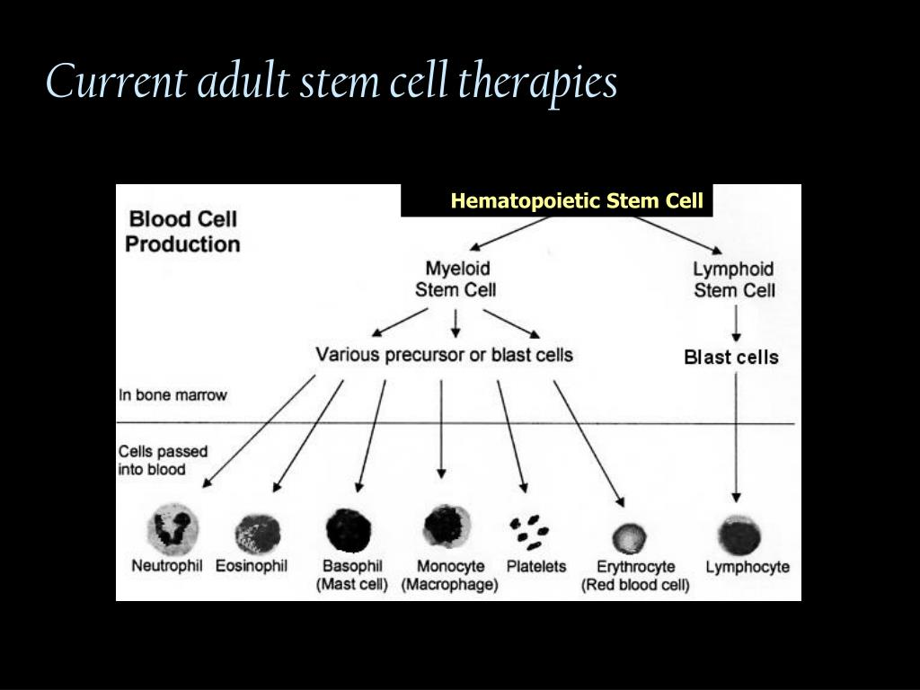 Current adult stem cell therapies