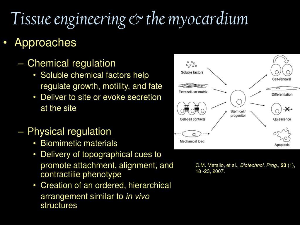Tissue engineering & the myocardium