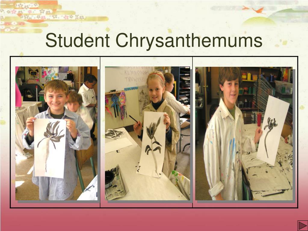 Student Chrysanthemums