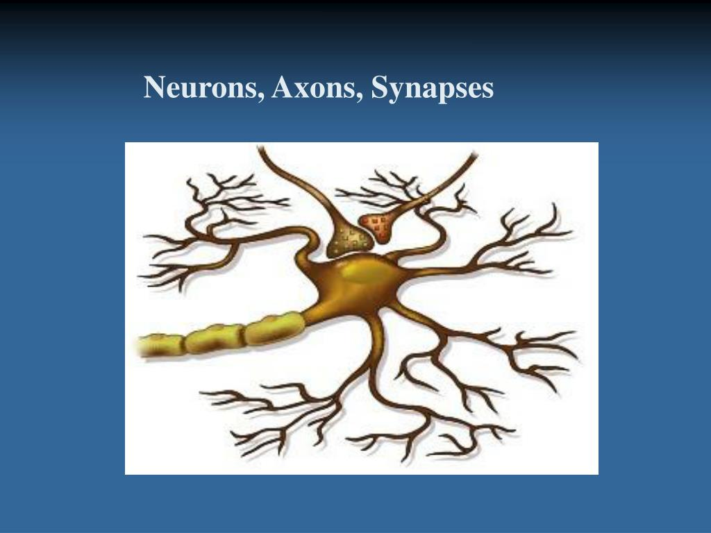 Neurons, Axons, Synapses