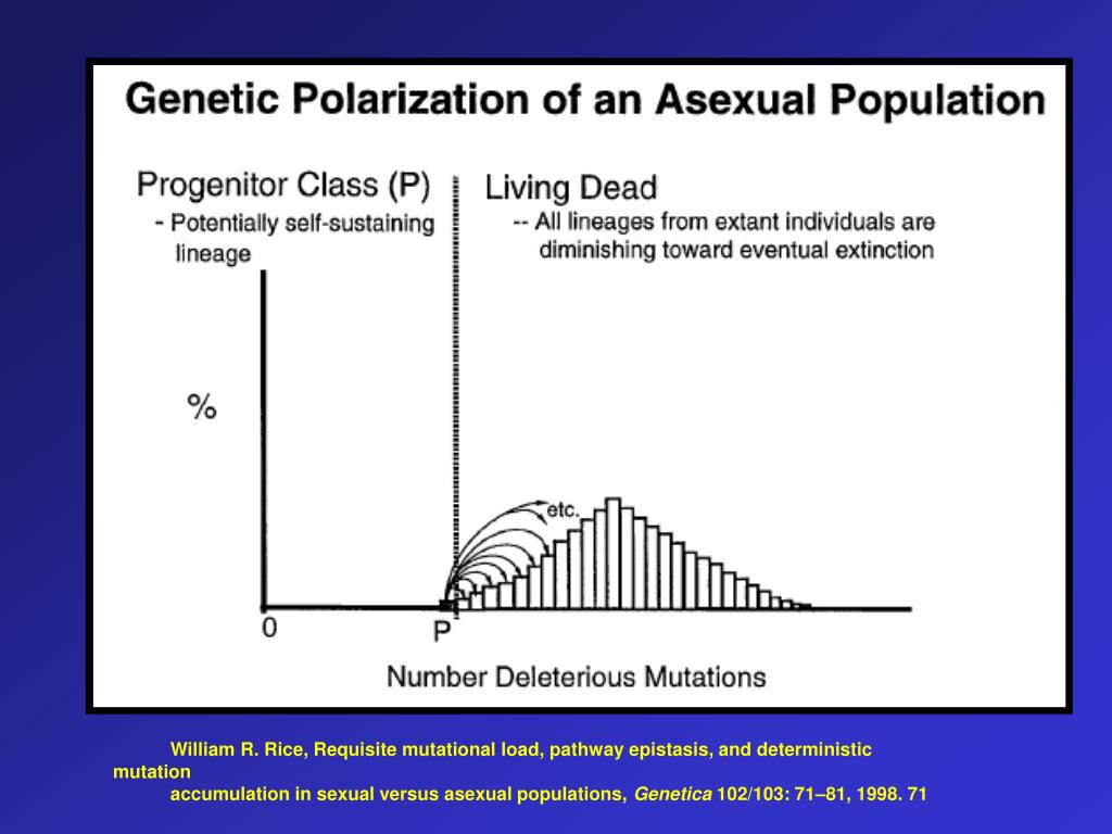 William R. Rice, Requisite mutational load, pathway epistasis, and deterministic mutation