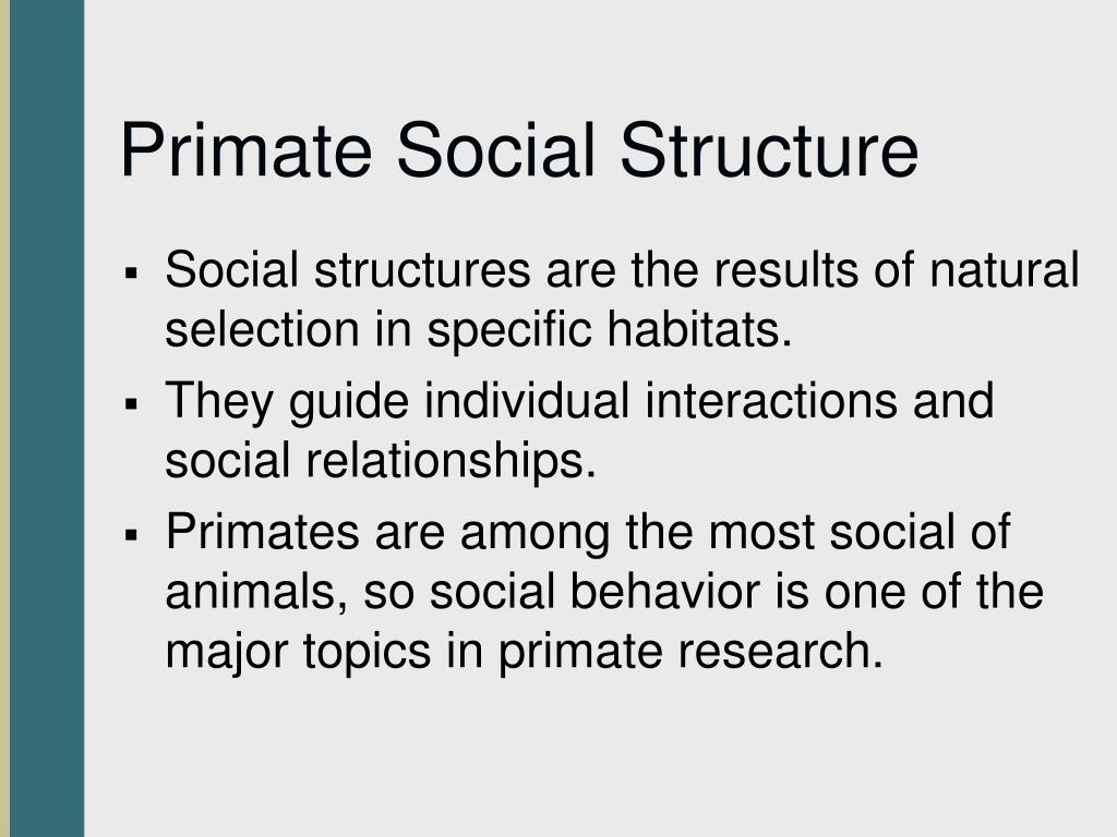 Primate Social Structure