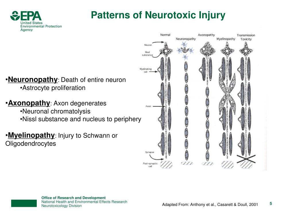 Patterns of Neurotoxic Injury