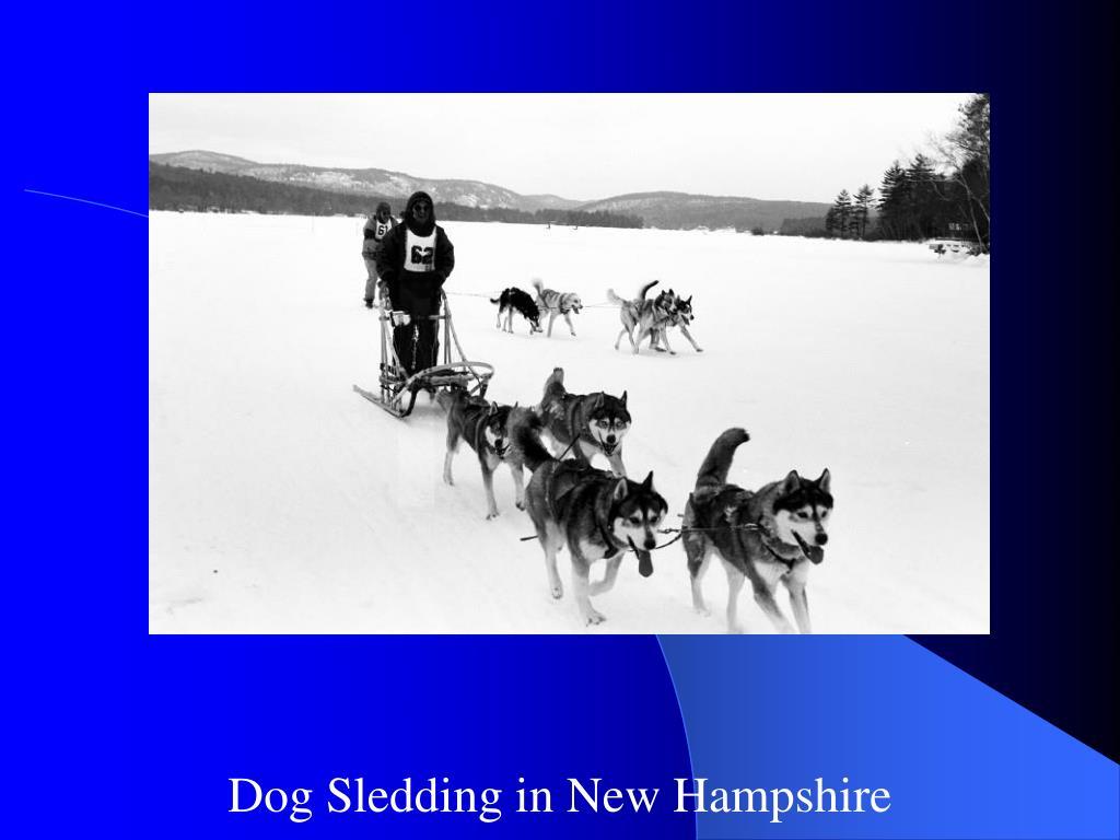 Dog Sledding in New Hampshire