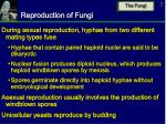 reproduction of fungi7