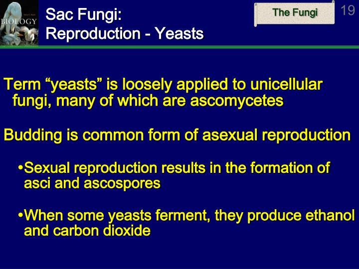 Do sac fungi reproduce sexually