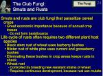 the club fungi smuts and rusts