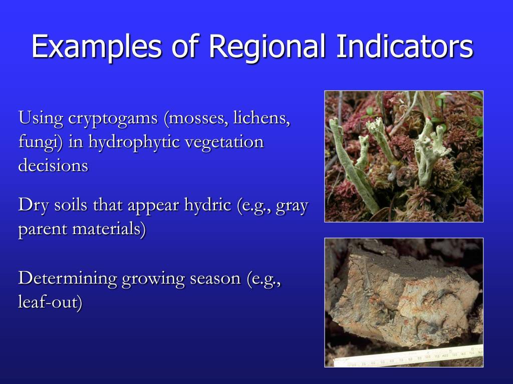 Examples of Regional Indicators