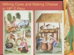milking cows and making cheese in 18 th c peru