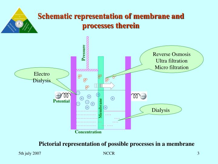 Schematic representation of membrane and processes therein
