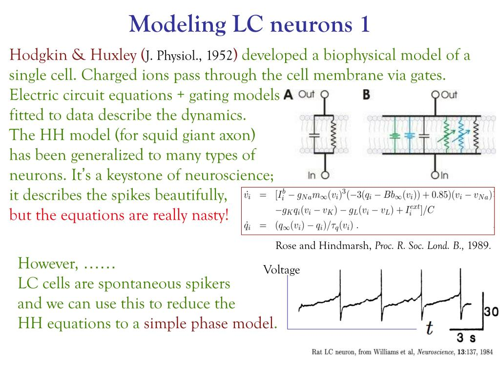 Modeling LC neurons 1