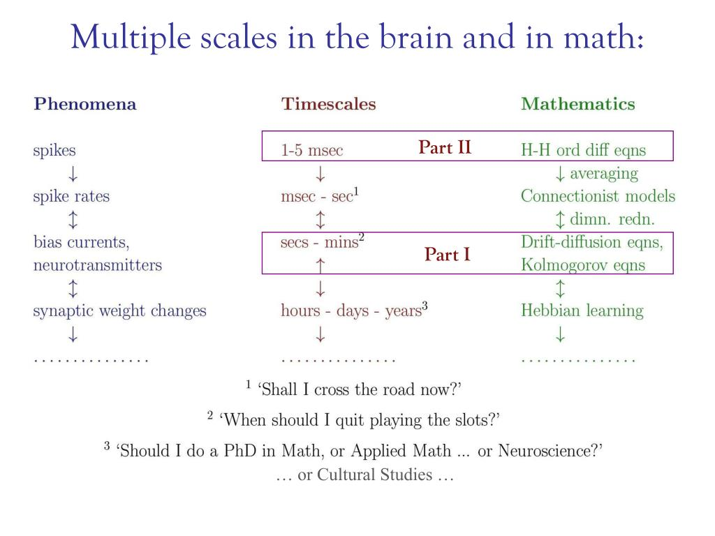 Multiple scales in the brain and in math: