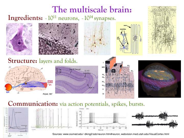 The multiscale brain