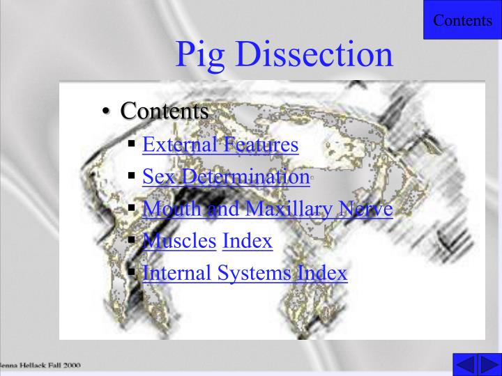pig dissection n.