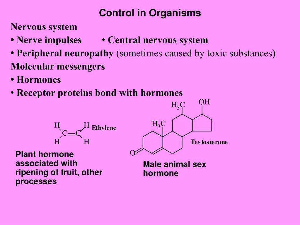 Control in Organisms