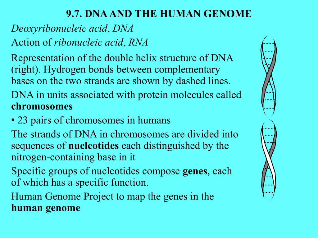 9.7. DNA AND THE HUMAN GENOME