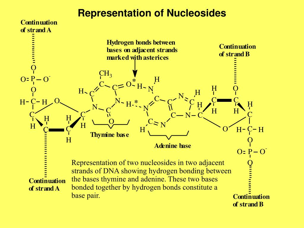 Representation of Nucleosides